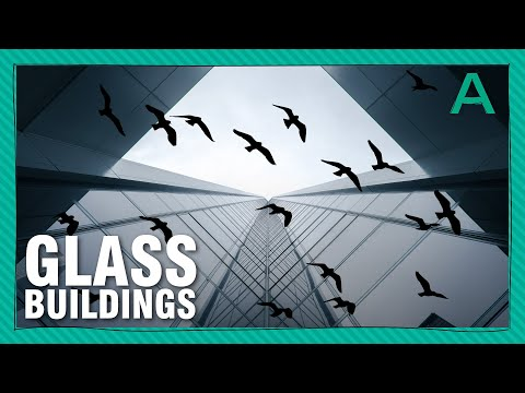 Why are Glass Buildings Bird Killers? (and how to stop it from happening)