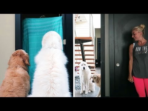 WHAT THE FLUFF CHALLENGE (Super Cooper Sunday #153)