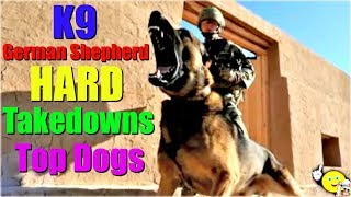 K9 Hard Takedowns | Police Dogs Compilation | CALI FUNNY