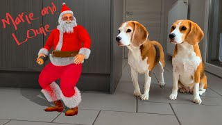 Funny Dogs Vs Santa Claus Animation : Funny Dogs Louie and Marie