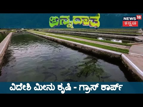 ಅನ್ನದಾತ | Guide To K'taka Small Scale Aquaculture & Information On Grass Carp Fish | Oct 26, 2018