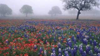 """Download Бесподобная мелодия! В тумане. Music Sergey Chekalin. """"In the fog"""". Music for the soul. 아름다운 러시아 음악 Mp3 and Videos"""