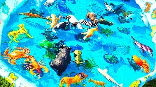 Learn Colors With Wild Animals Sea Animals Names in Water Tub Shark Toys For Kids
