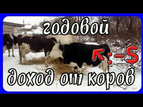 реальный заработок 💰 на коровах//выгодно ли сдавать молоко 🍶на молоковоз.