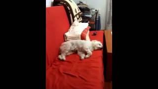 Собаки тоже видят сны)))