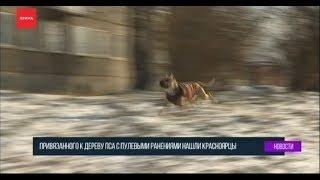 Пса с пулевыми ранениями нашли в лесу