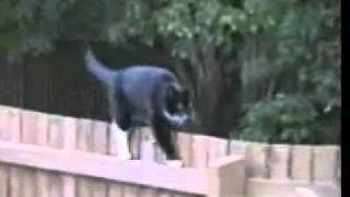grappige katten