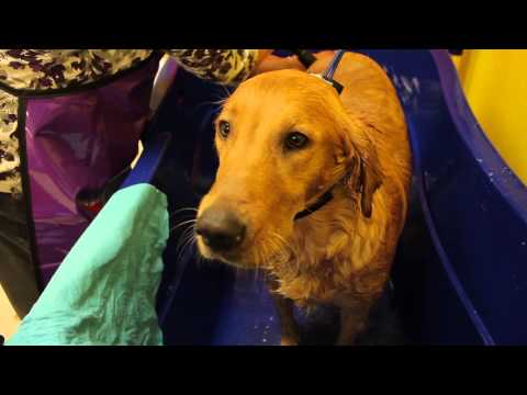 Barks And Bubbles Of Desoto: What Is A Self Serve Dog Wash?