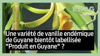 La vanille Pompona, variété endémique de Guyane #EwagNews