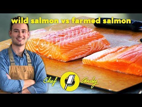 Wild Salmon vs Farmed Salmon // Chef Andy