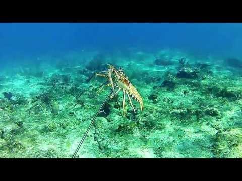 Spearfishing Hawaiian Sling GI, Bahamas