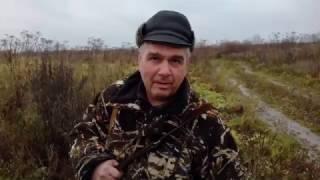 Охота на гаршнепа с Русским охотничьим спаниелем
