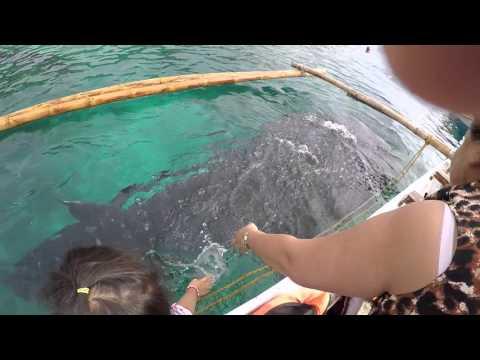 Vacation 2015 - Butanding Encounter (Oslob, Cebu)