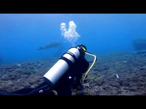 Ternate-Tidore-Jailolo Dive Trip Oct 2017