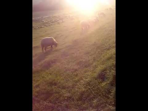 Muzica de oi