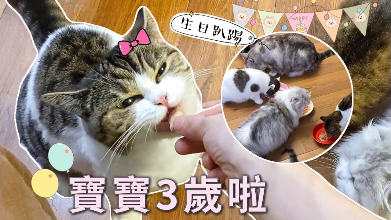 小貓開3歲生日趴體,來了12個小客人:可以不走程序直接吃嗎| 李喜貓