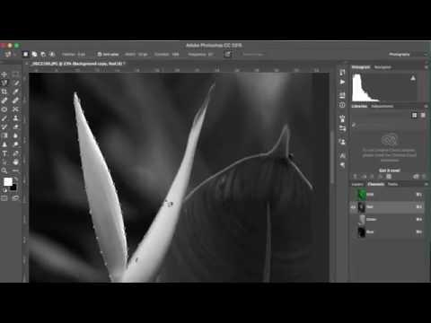 การตัดพื้นหลังให้เป็นสีขาวด้วย photoshop cc (แบบง่าย)