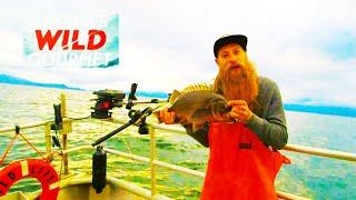 Заливное из белой рыбы Палтус с полентой Высокая кухня Аляски ALASKA S WILD GOURMET Высокая кухня