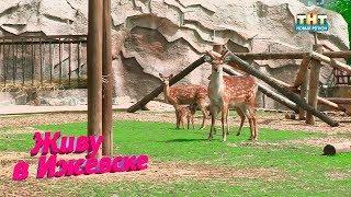 В Ижевском зоопарке пополнение