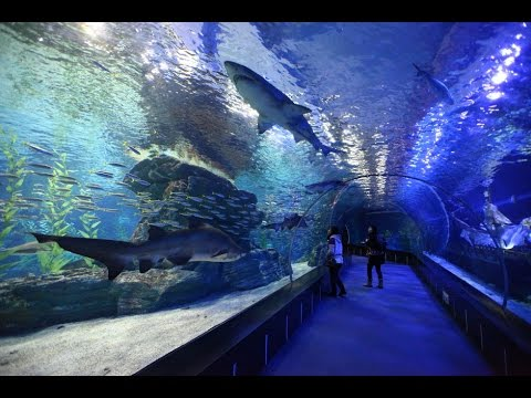 Sea Life Busan South Korea Aquarium Youtube