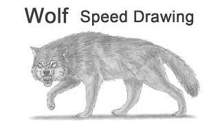 Wolf Growling / Snarling Time-lapse (Speed) Drawing