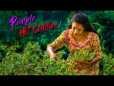 Traditional & simple lunch was more appetizing with these colourful chillis | Traditional Me