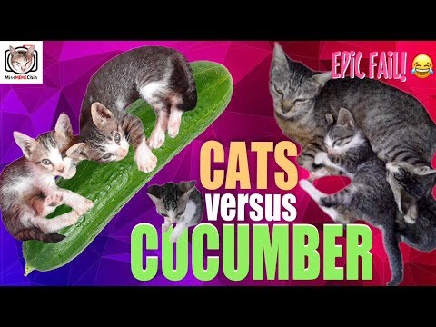 CAT DIARY #28: ARE CATS SCARED OF CUCUMBER? (EPIC FAIL EXPERIMENT)