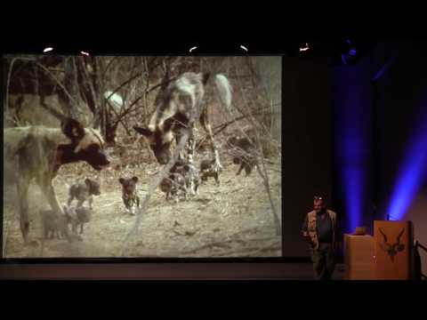 Protecting Painted Dogs in Zimbabwe