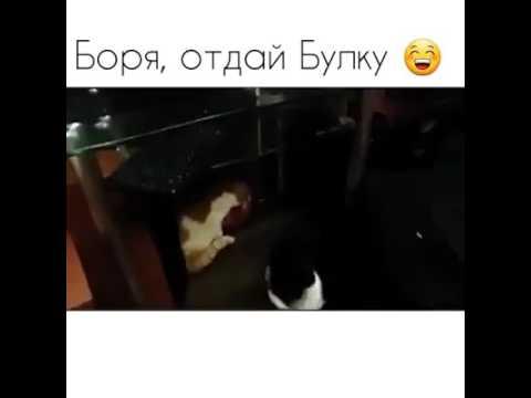 Кот не отдает батон видео