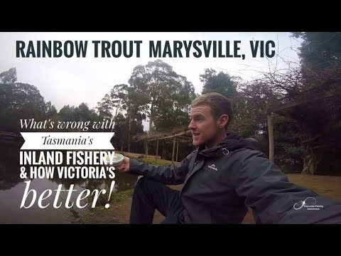 TFA #17 | Whats Wrong With Tasmania's Inland Fishery & How Victoria's Better | Rainbow Trout In VIC