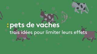 Pets de vaches : 3 idées pour limiter leurs effets - franceinfo