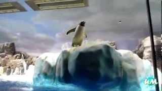 Смешные моменты из жизни пингвинов