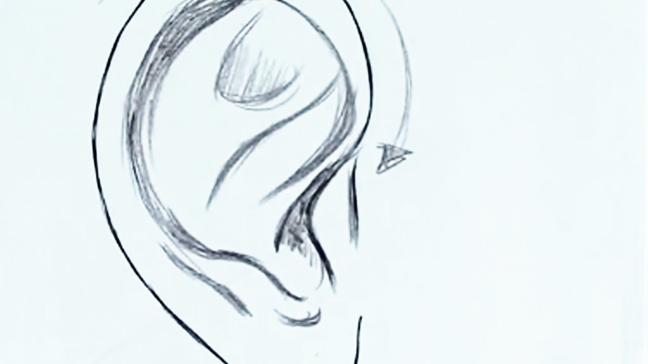 How To Draw The Ear Easy Youtube