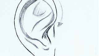 How To Draw The Ear (Step by Step)