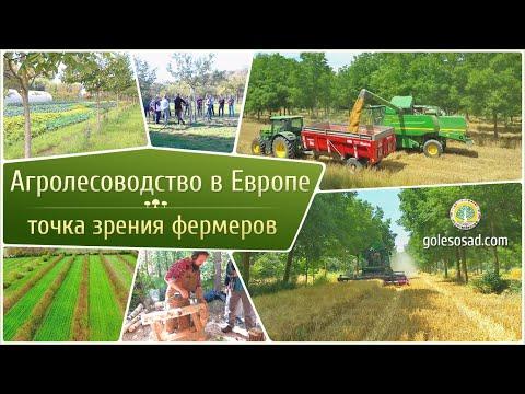 Агролесоводство в Европе! Точка зрения фермеров.