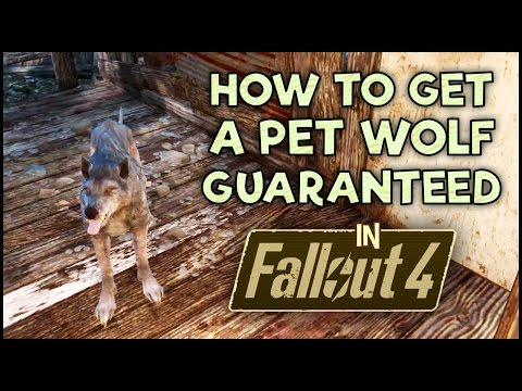 How To Get A Pet Wolf In Fallout 4 Guaranteed!