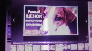 Фотографии собаки элли ди джины!!!!!!!