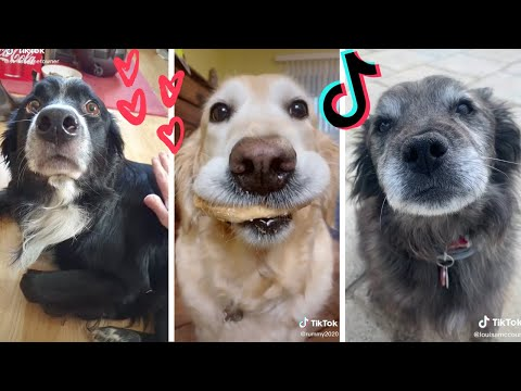 Dogs Doing Funny Things TIK TOK Compilation ~ Cutest Doggos of TikTok ~ Puppies