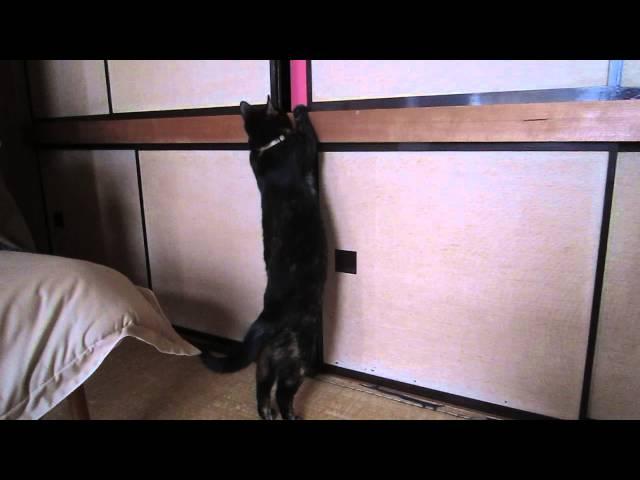 押し入れに入る猫