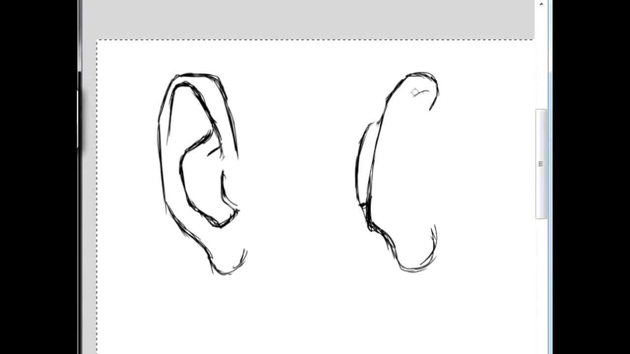 Anatomy Drawing Practice Episode 1 Drawing Ears Youtube