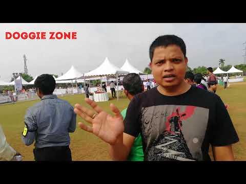 Dog show Bhubaneswar 2017