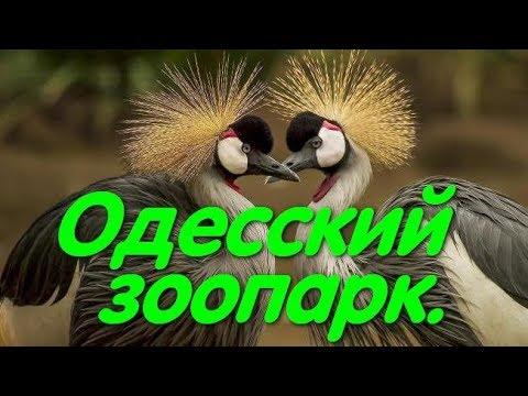 Одесский зоопарк. Верблюд. Животные. Медведь. Павлин.Лучшие зоопарки Украины.