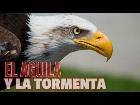 El Aguila Y La Tormenta Una Reflexion Corta De Motivacion