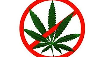 Бросаю курить марихуану какой период созревания конопли