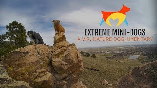 Extreme Mini-Dogs: A VR Nature Dog-Umentary (VR180) thumbnail