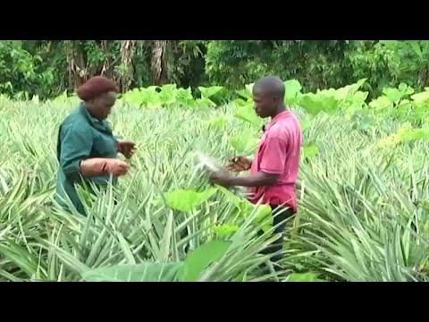 Togo, Développement du secteur agricole