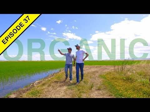 How ORGANIC Rice is Farmed in California!