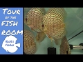A look at  the tanks in the fish room; german blue rams; apistogramma; discus and more! happy room