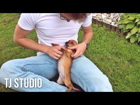 The Tourist - A dog story (Short Movie) 'DOG VIDEO'