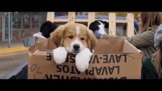 Собачья жизнь / A Dog's Purpose (2016) Трейлер HD